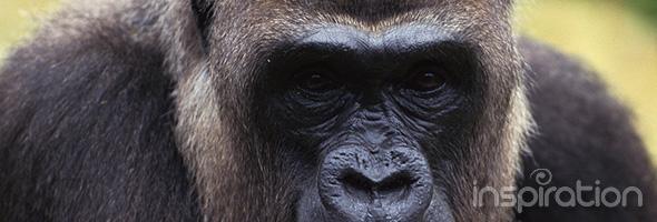 Wrestle a Gorilla